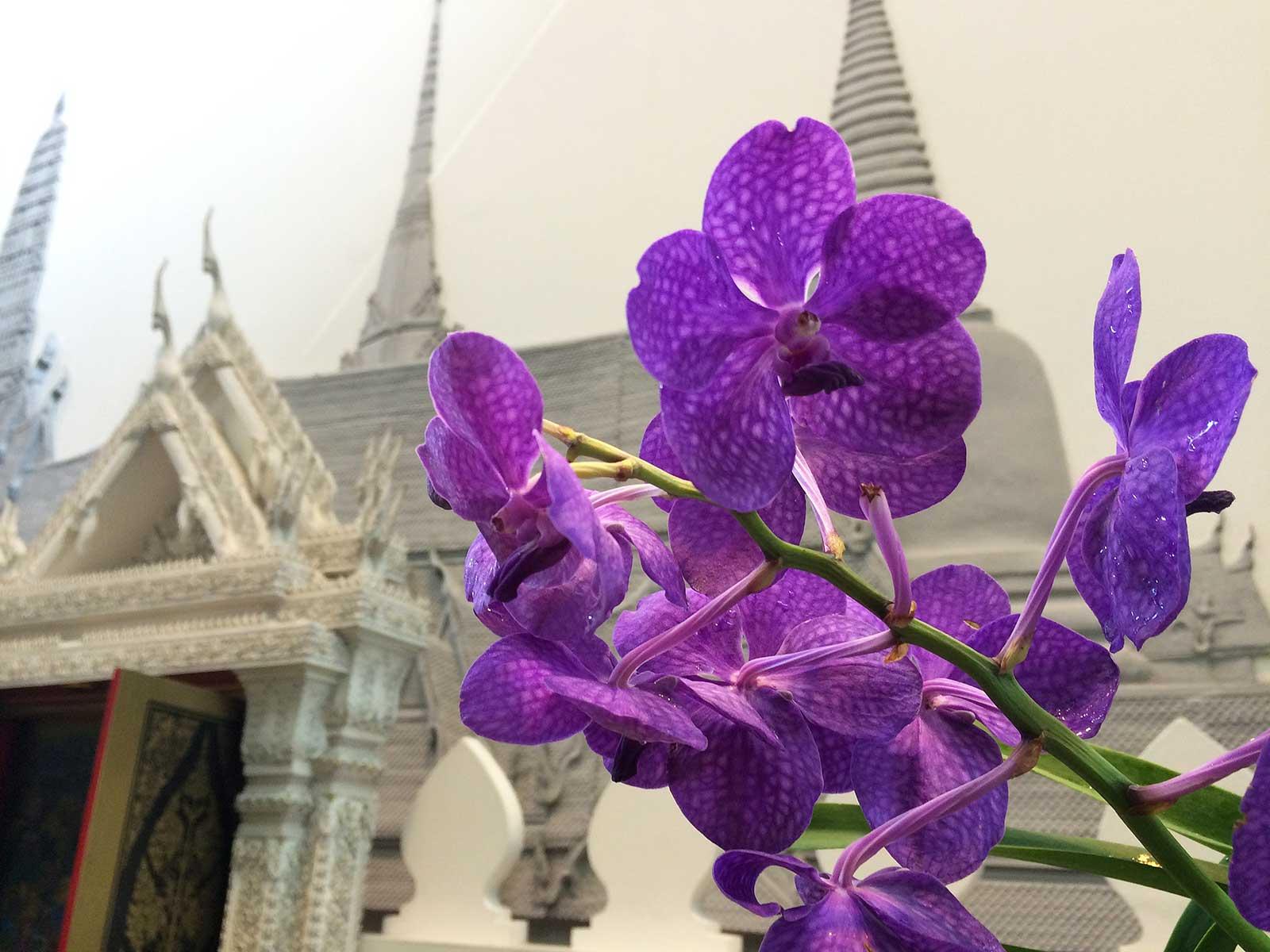 Suvarnabhumi havaalanı'ndaki orkideler
