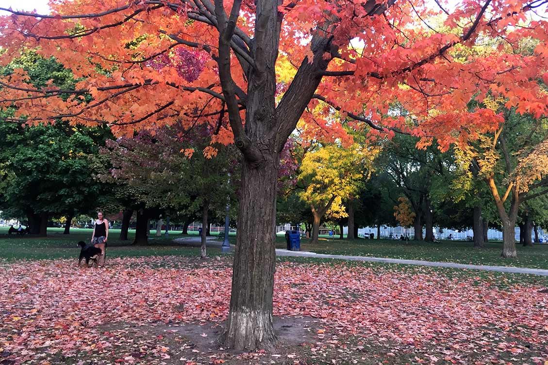 Sonbaharda Toronto'da ev arayışı devam ediyor