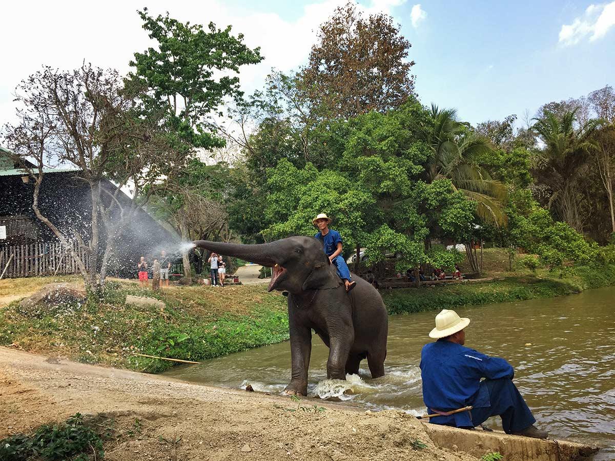 Thailand Elephant Conversation, arabayla Tayland