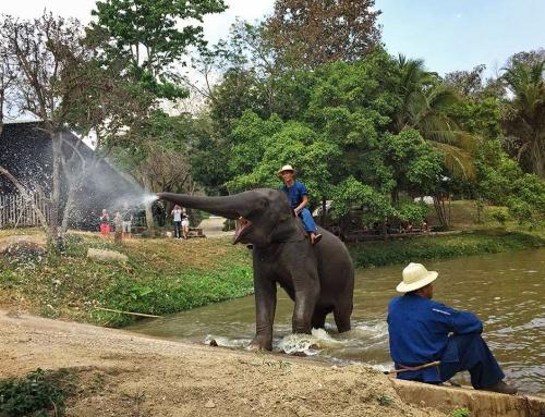 7 günde Bangkok'tan Chiang Mai'a Arabayla Tayland Turu