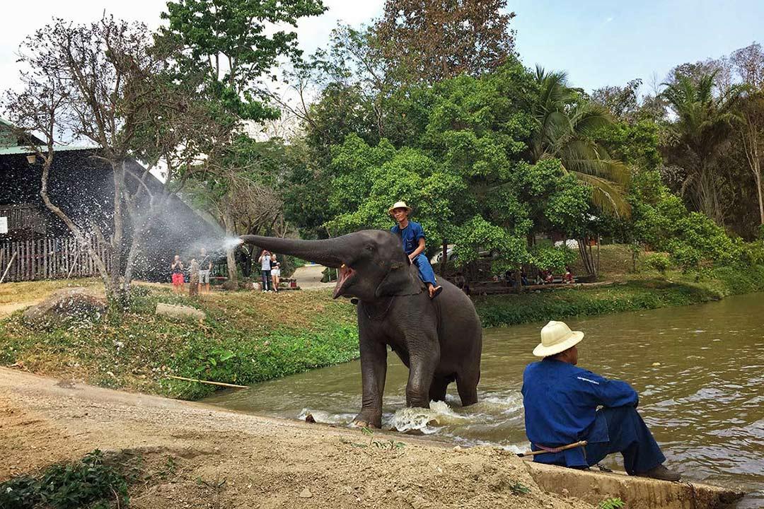 Thailand Elephant Conversation, road trip, arabayla Tayland