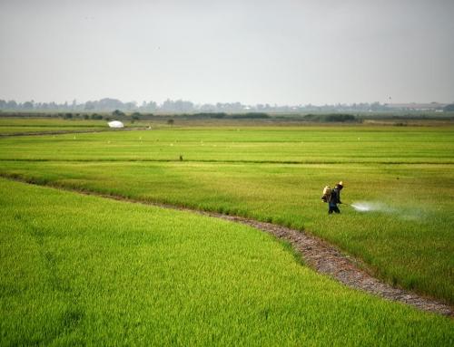 Orta ve Kuzey Tayland'da Sürüş ve Arkadaşlık Tekniği