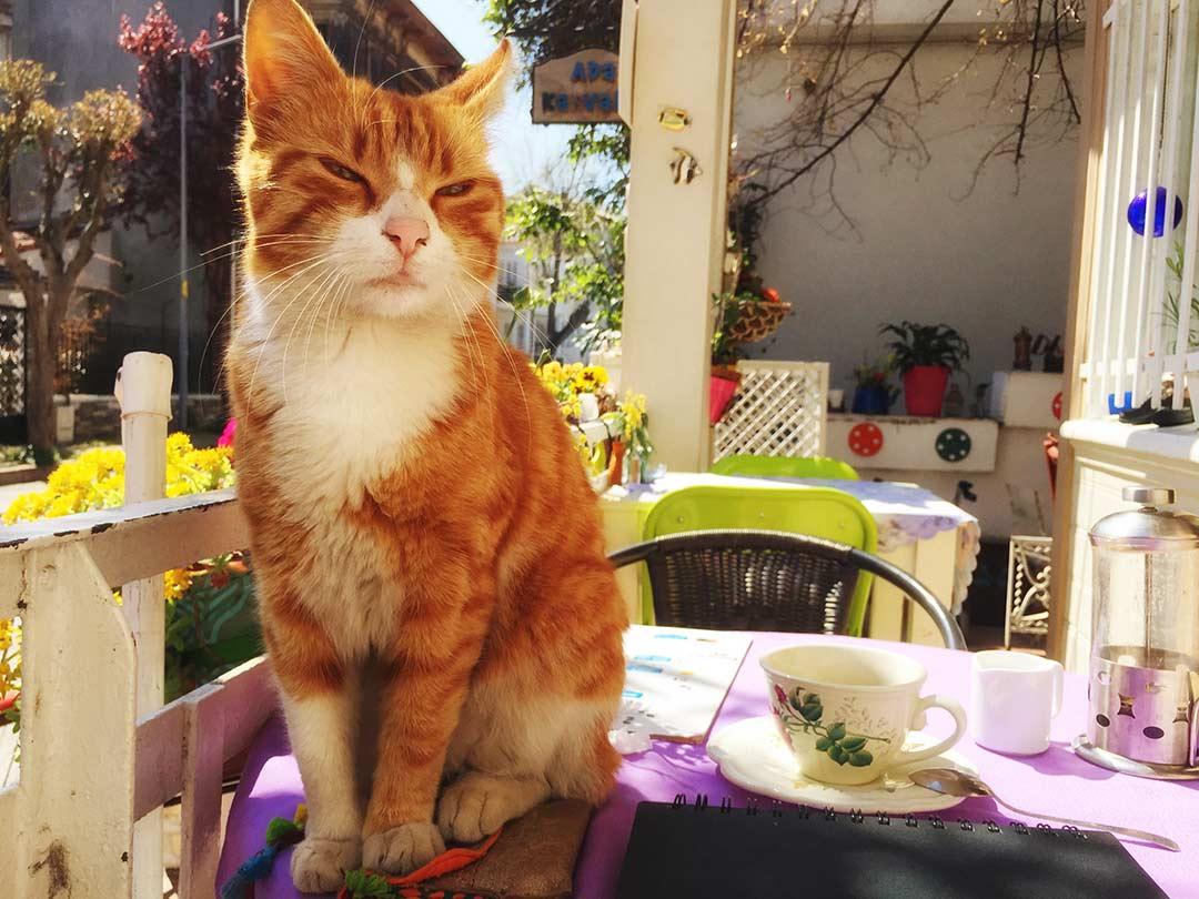 istanbul kedileri, geri dönmek