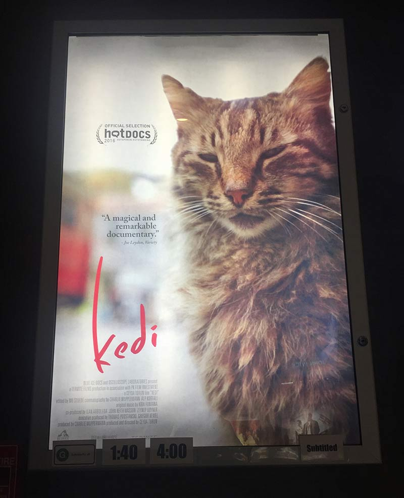 'Kedi' filminin posteri. Toronto'da 6 ay